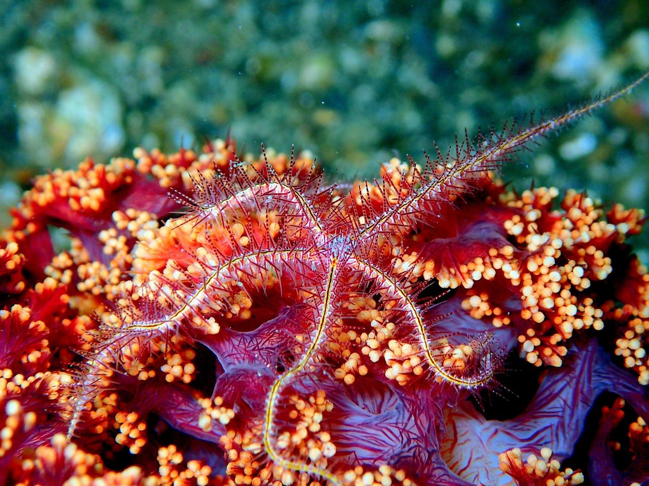 смотреть картинки морских звезд поставил диагноз дополнительная