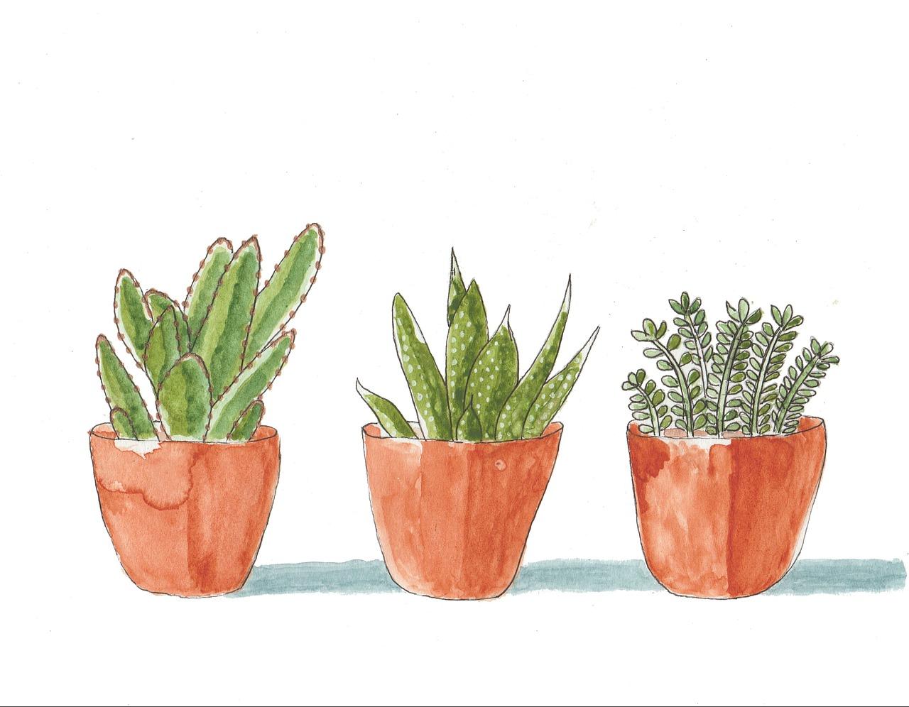 Succulents 2337197 1280