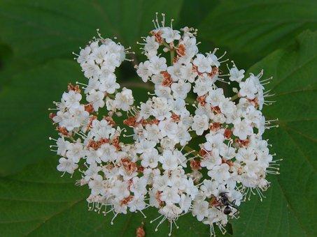 Fleurs vivaces pour votre jardin