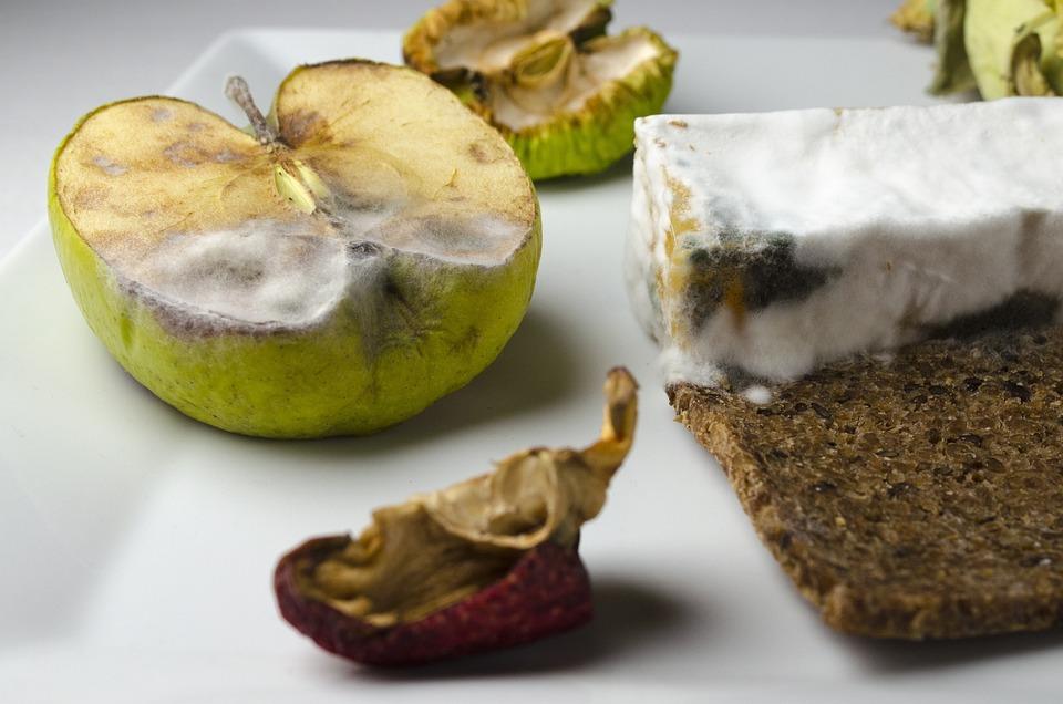Lebensmittel Schimmel Schimmelkäse Kostenloses Foto Auf Pixabay
