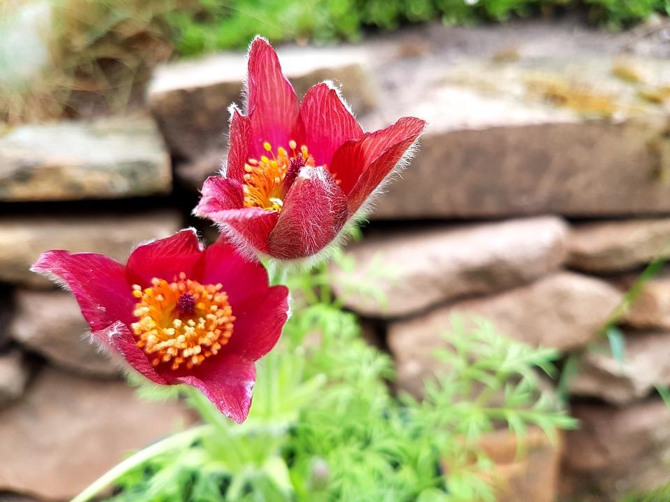 Blumen Frühling Steingarten - Kostenloses Foto auf Pixabay