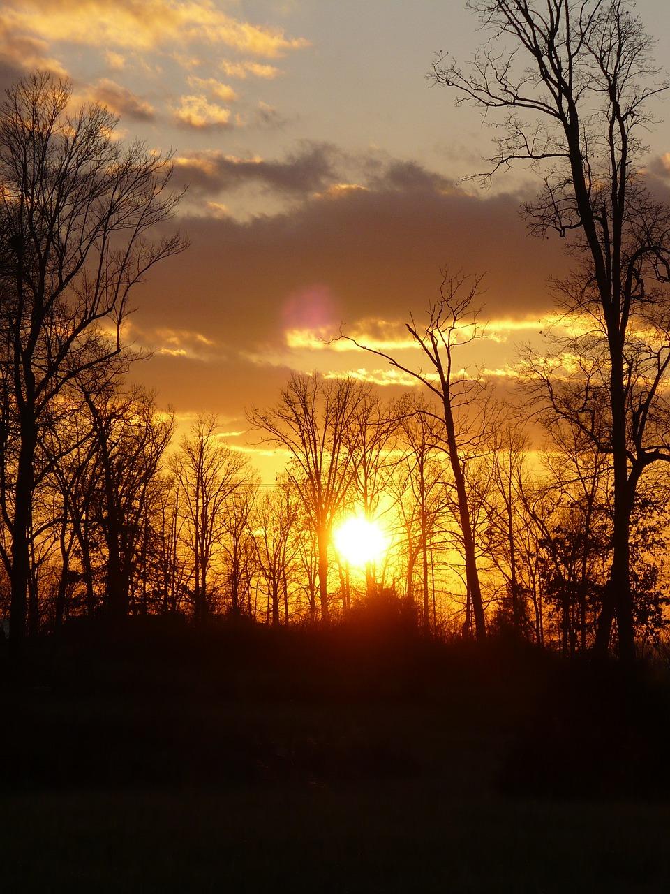 дизайн картинка красивого заката в лесу этот негласно