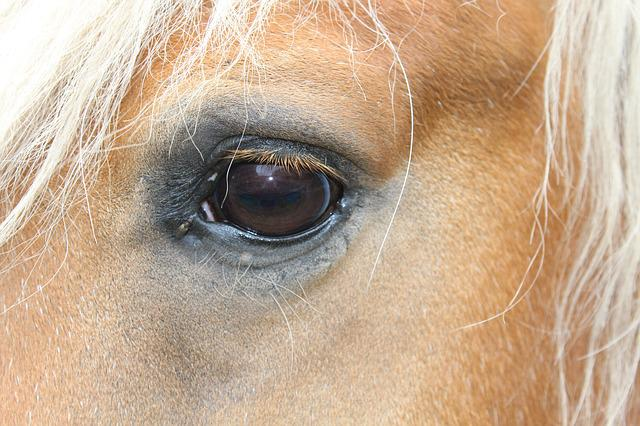 free photo  horse eye with a bow tie  horse