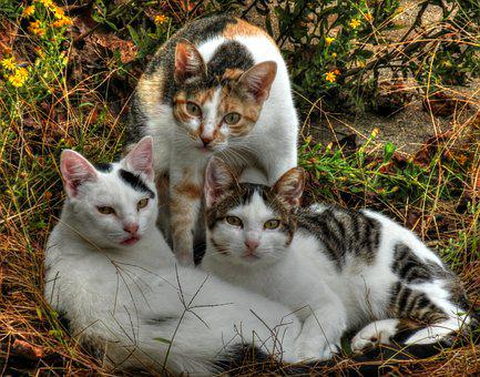 Cats, Three, Animal, Kitten, Domestic