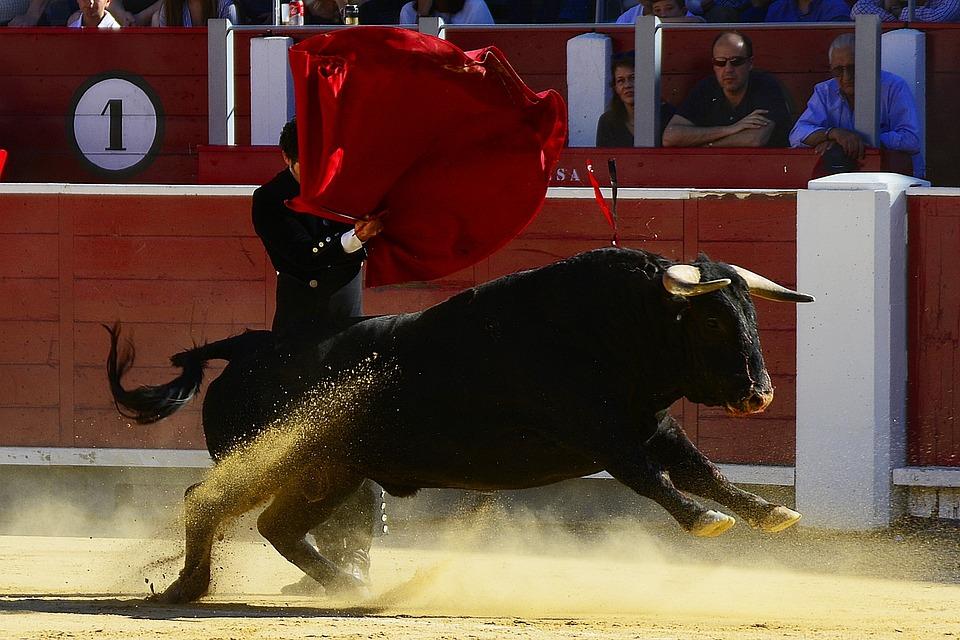 Toros, Torero, España, Albacete, Matador, Plaza Toros