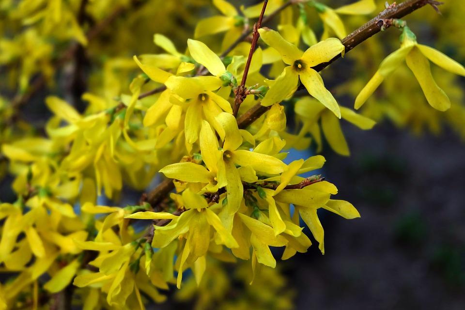 Yellow bush krupnyj plan flower free photo on pixabay yellow bush krupnyj plan flower yellow mightylinksfo
