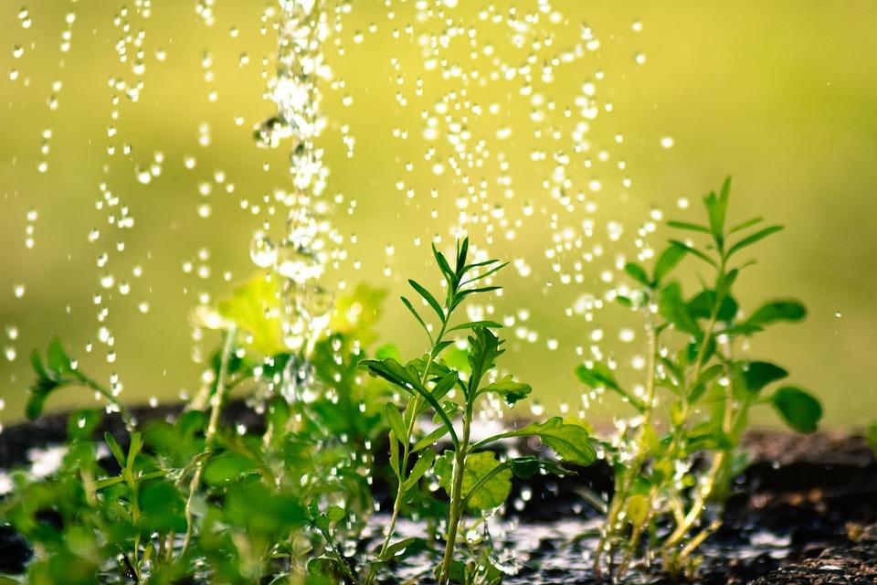 Gota De Água, Regar As Plantas, Plug, Fundição, Água