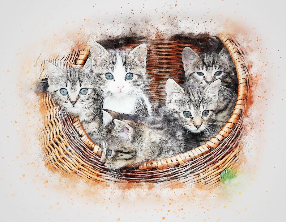 Gambar Lykasal Love Page 2 Kucing Biasanya Memiliki Berat