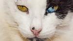 eyes, strange, cat