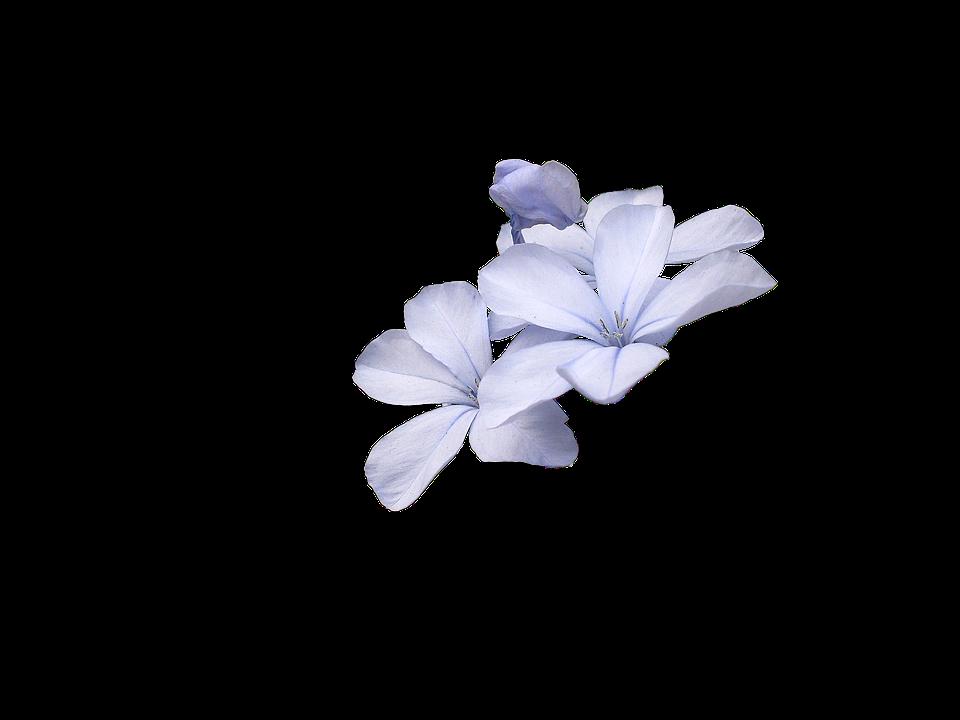 Wild Flowers Blue Flower Nature