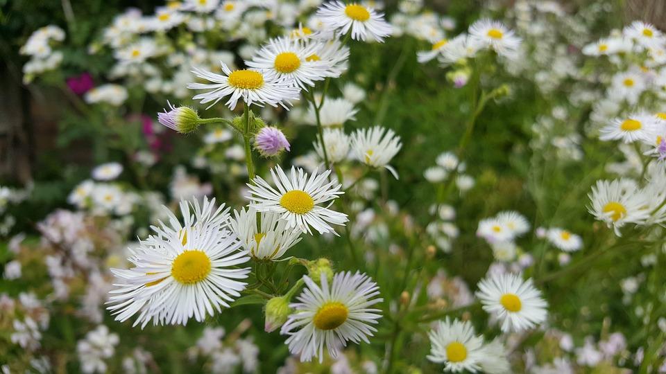 hoa thach thao trang