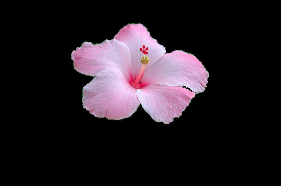 Crop images pixabay download free pictures flower pink flower pink garden mightylinksfo