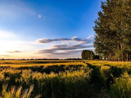 ООН: активное развитие сельского хозяйства ускоряет изменения климата