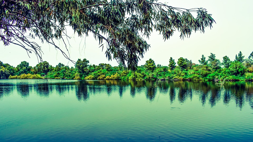 Tree, Lake, Nature, Landscape, Forest, Reflection