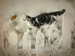cat, butterfly, whimsical
