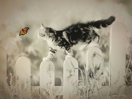 Katze, Schmetterling, Skurrilen