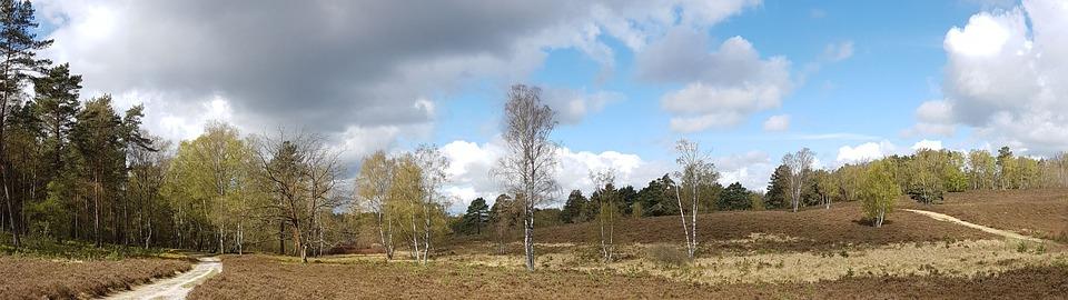 Wallpaper Dual Screen Heide Way Nature Heather