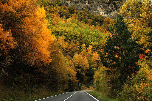 Forest, Trees, Autumn, Nature, Road