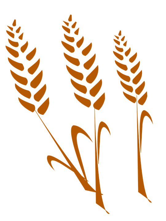 The Wheat Silhouette Free Image On Pixabay
