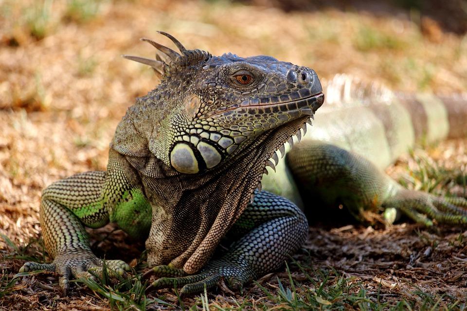image animaux reptiles
