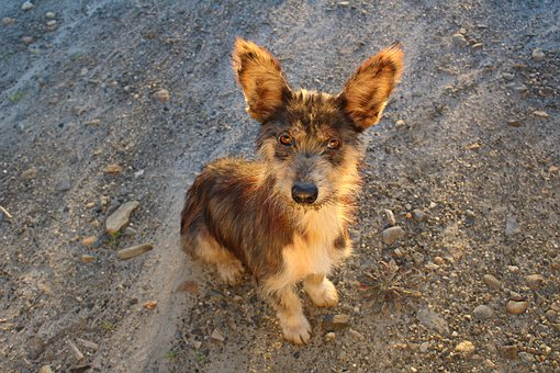 Adoption, Dog, Pet, Puppy, Animal, Cute