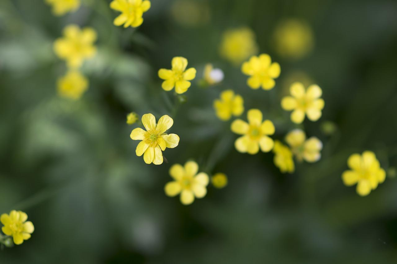 Мелкие желтые цветочки картинки
