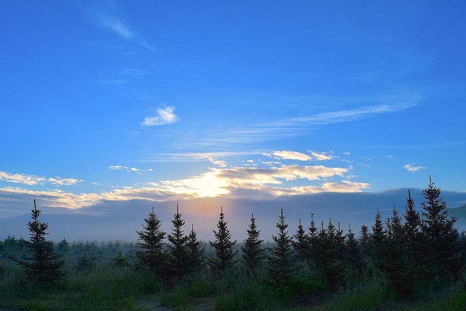 Sunrise Field Mist Pine  U00b7 Free Photo On Pixabay