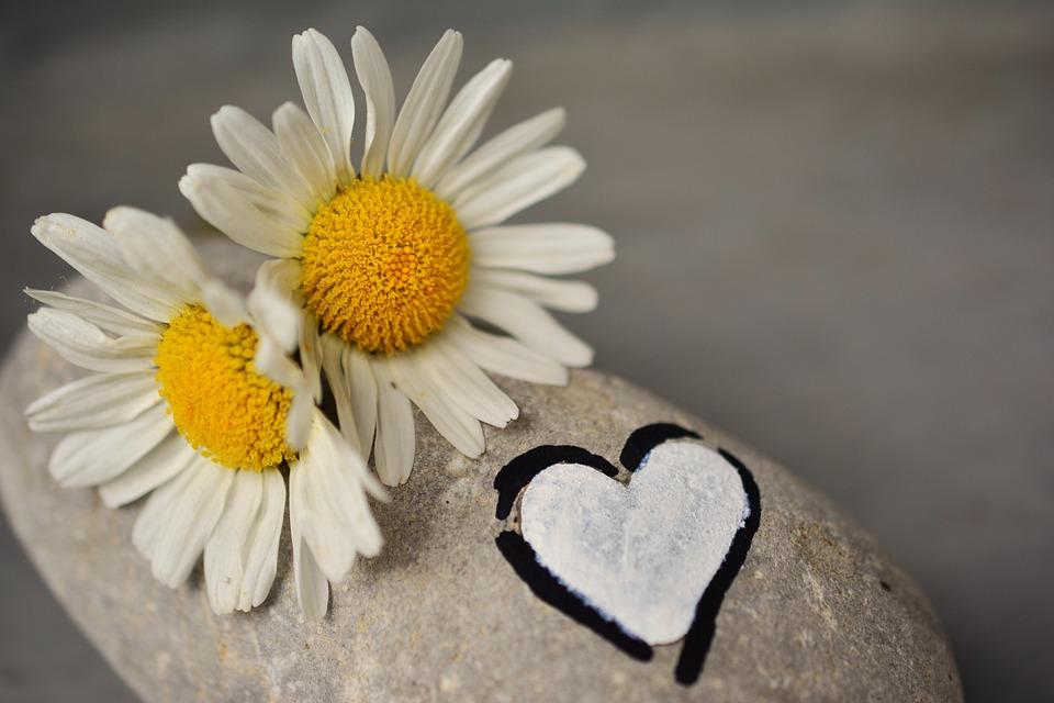 Daisies, Stone, Heart, Love, Friendship, Partnership