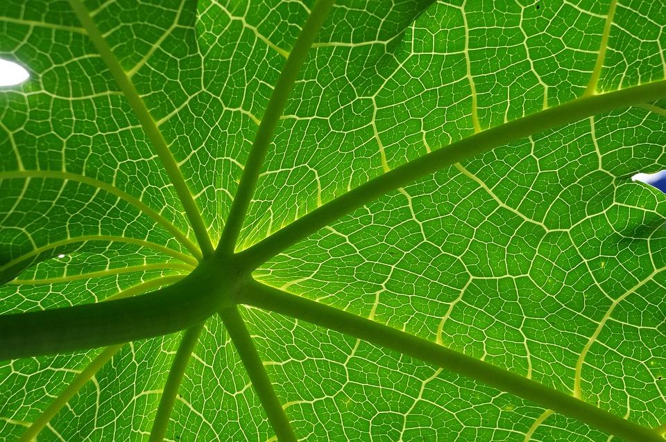 Yesil yaprak sorgusuna uygun resimleri bedava indir for Green pflanzen