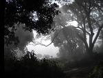 woods, fog, guinea