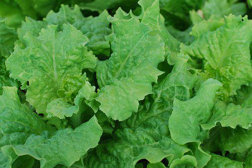 Leafy Vegetables & Leafy