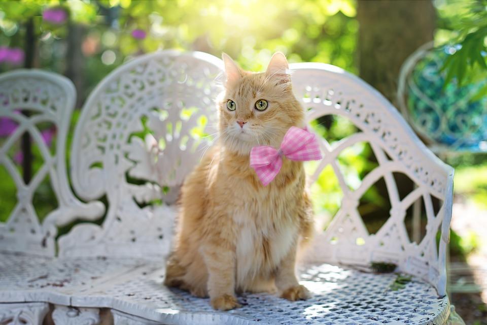 Cat, Kitty, Felino, Estate, Sole, Animale Domestico