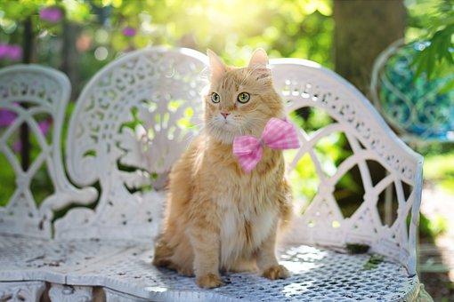 Katze, Kätzchen, Katzen, Sommer