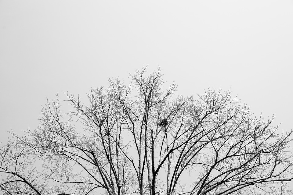 Tree Black And White Art Nature The Forgotten Sky