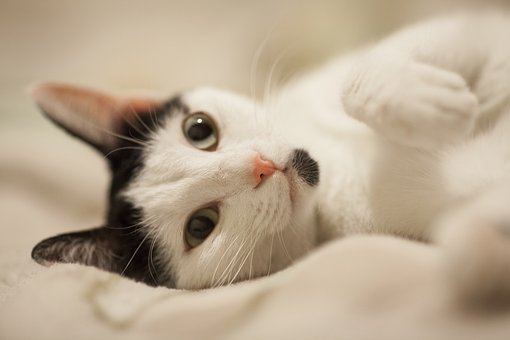 Cat, Overview, Cute, White