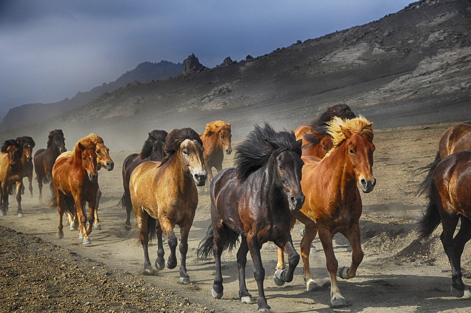 Horses, Stampede, Nature, Running, Animal, Herd, Mare