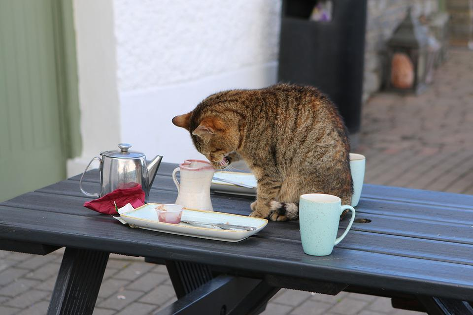 Cat Coffee Table free photo: ireland, cat, coffee, tee, table - free image on