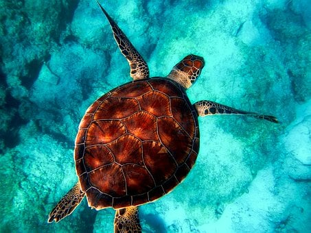 Sea, Ocean, Turtle, Wildlife, Closeup