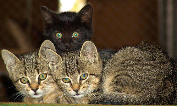 Cats, Little Friends, Favourites