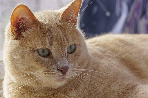 těsná zrzka kočička