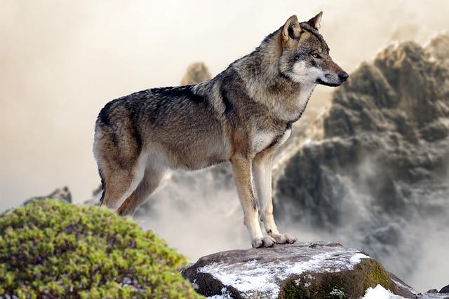 Wild Horse S Natural Predator