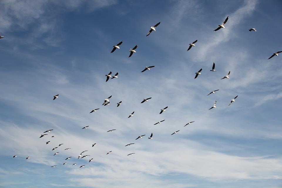 Vliegen, Vrijheid, Geluk, Hemel, Plezier, Inspiratie