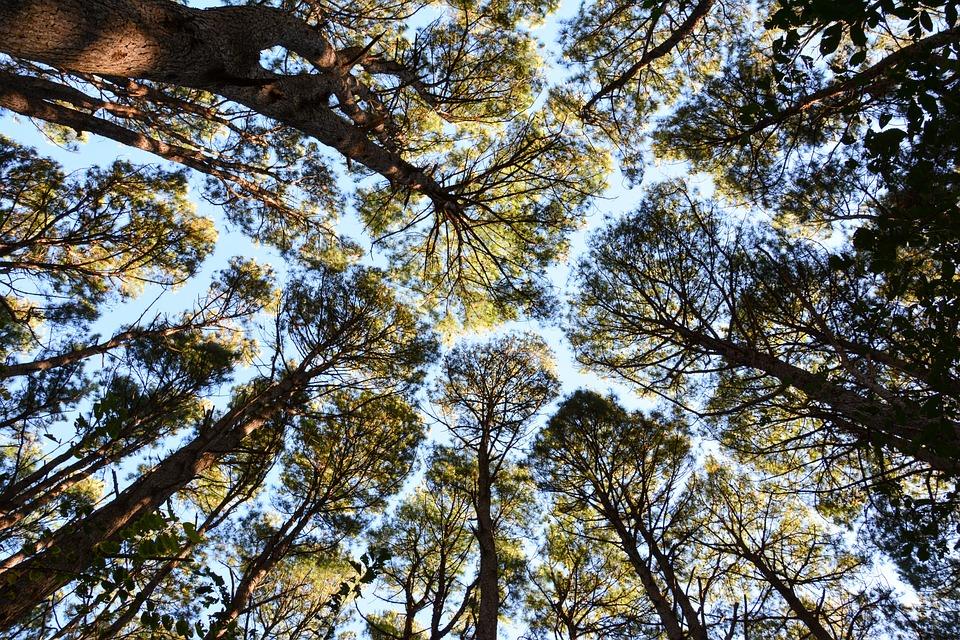 fort arbres arbre ciel - Arbre Ciel