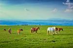 horses, pasture, prairie