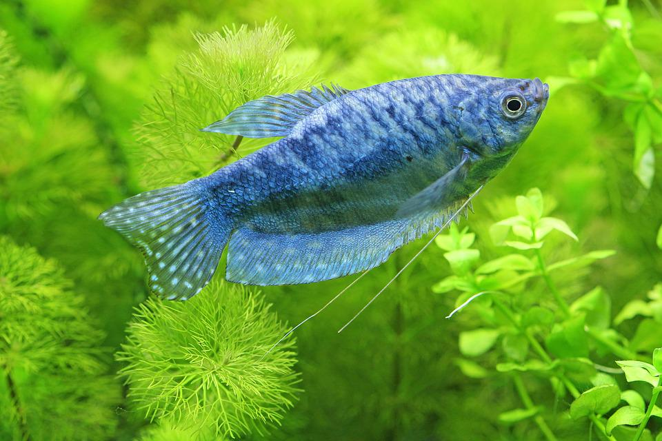 Hobby, Tropical Fish-Keeping, Aquarium, Underwater