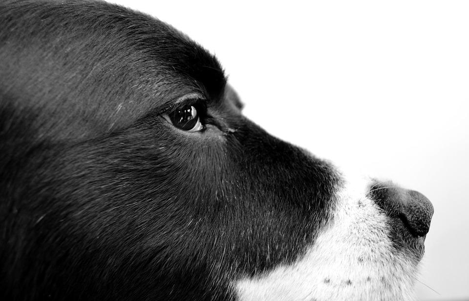Dog photography black pet