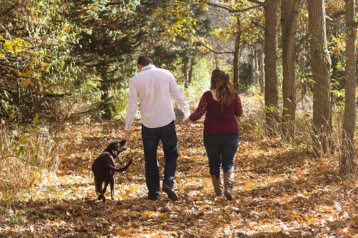 家族, 徒歩, 林, 秋, ファミリー犬, パスの森, ウォーキングの家族