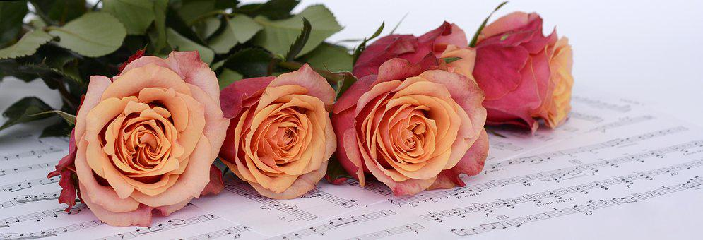 Roses, Orange, Flowers, Sheet Music