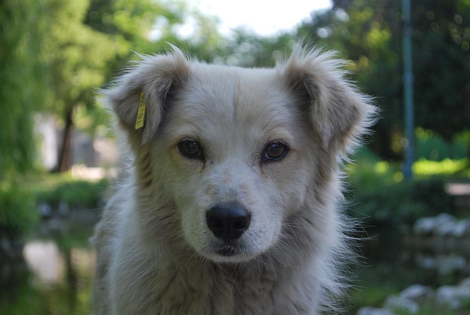 Köpek Beyaz Profil Arka Pixabayde ücretsiz Fotoğraf