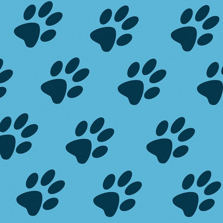 how to clean cat paws